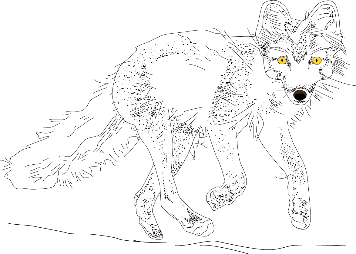 lonelypolarfuchs